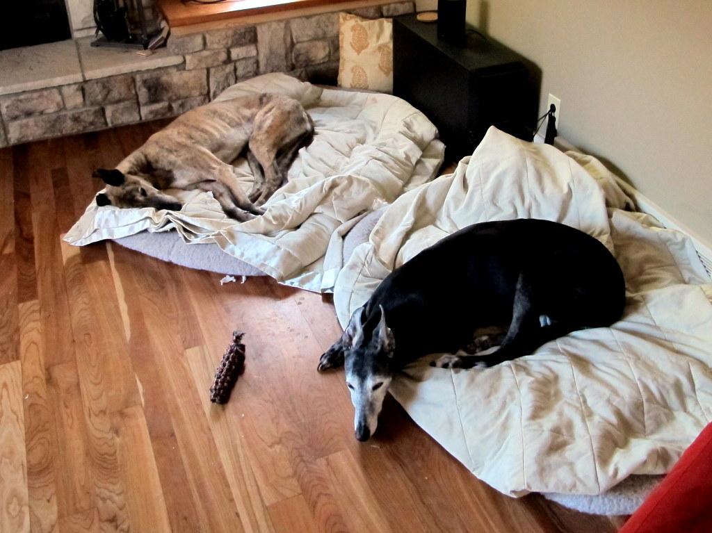 Vier Hunde, Freundschaft und ein Berg an Emotionen