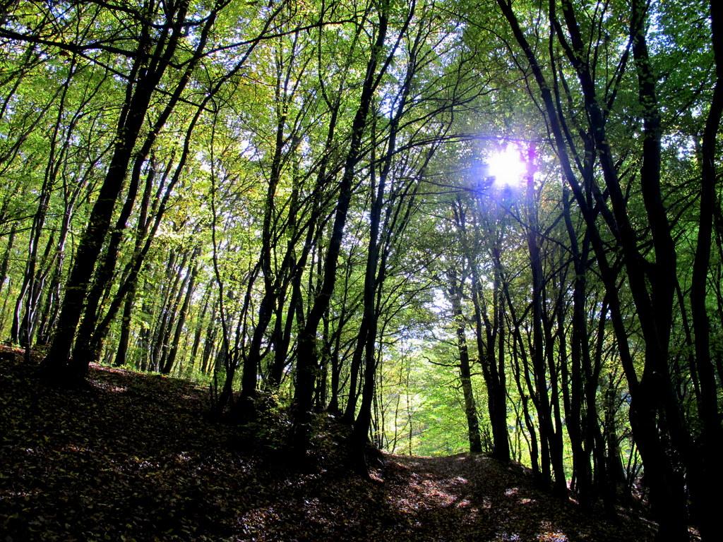 Wald – Herbst – Trier