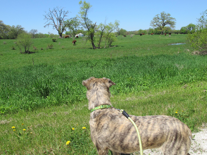 Mit Keeper Kühe beobachten