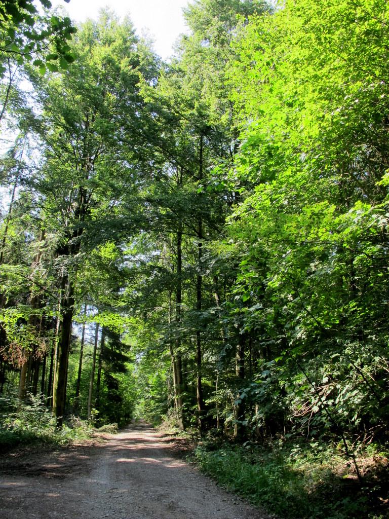 Westliche Wälder