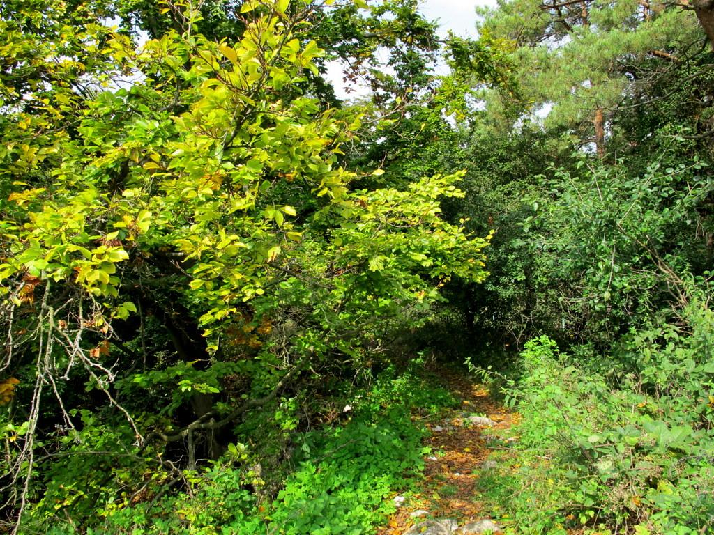 Kleine Pfade durch spätsommerlichen Wald