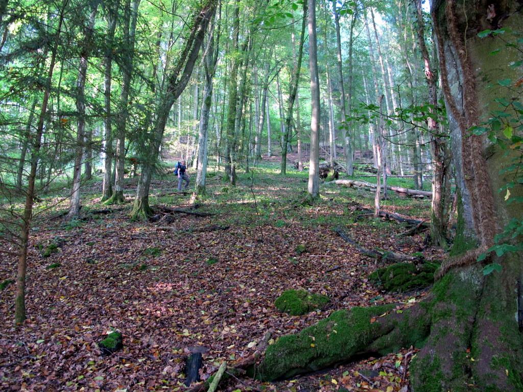 Irgendwo im Wald - naja, wir sind ein kleines bisschen vom Weg abgekommen ;-)