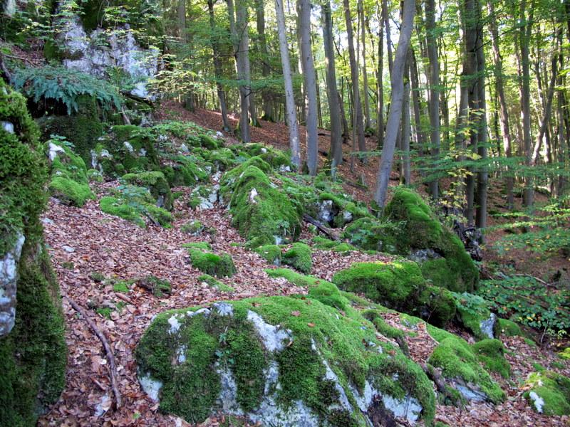 Zauberwald
