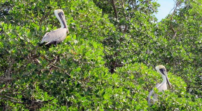 Florida – Everglades