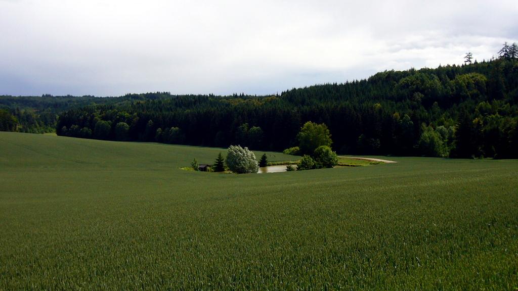 Engelshof bei Burgwalden