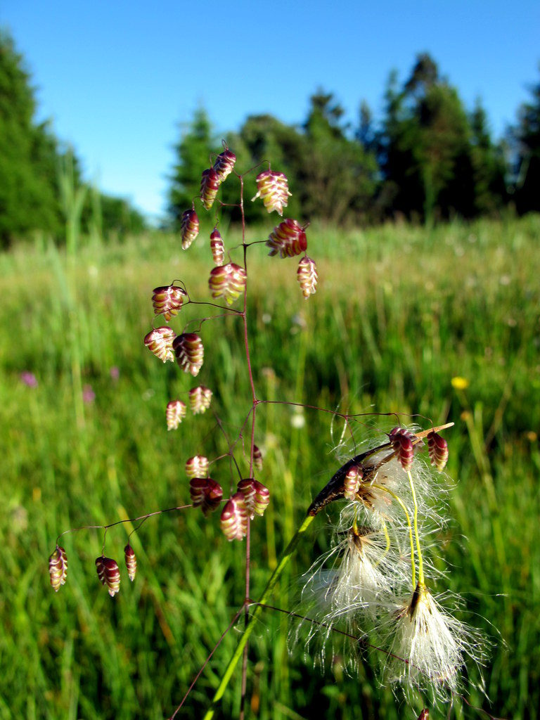 Orchideenwiesen Andechs (35)
