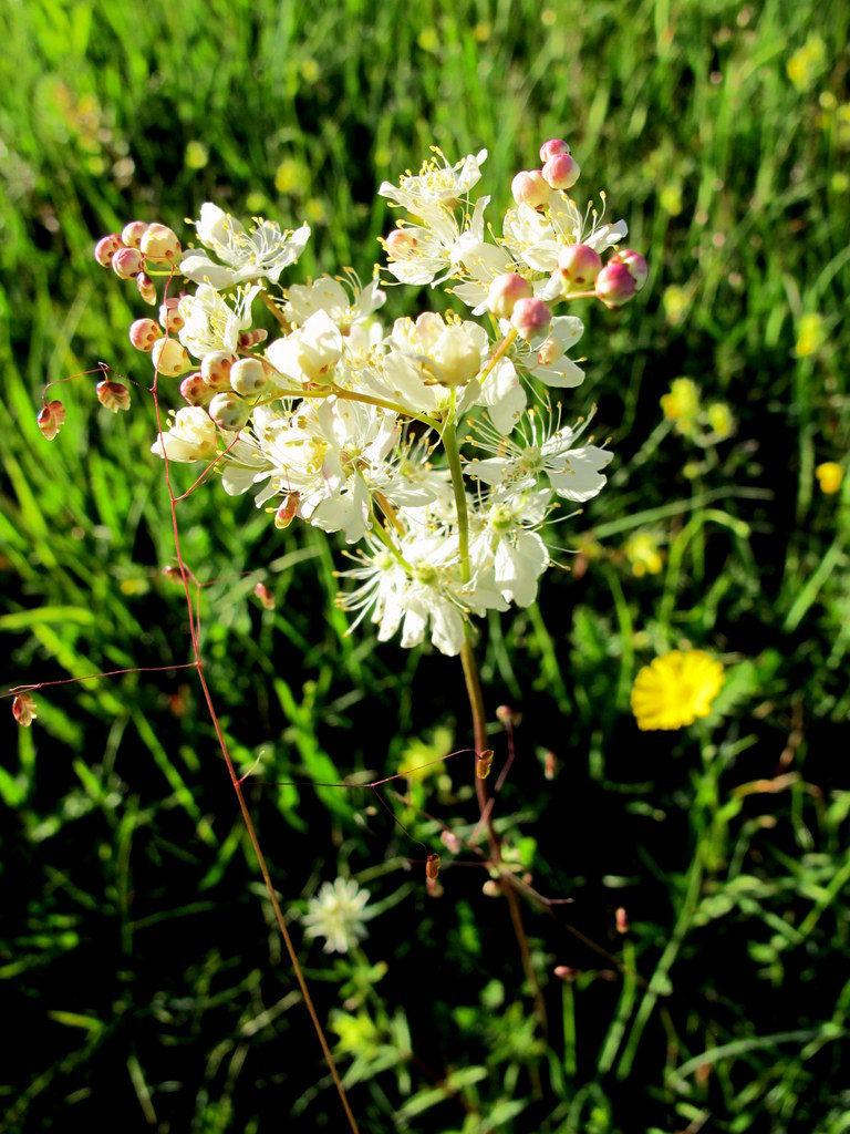 Orchideenwiesen Andechs (41)