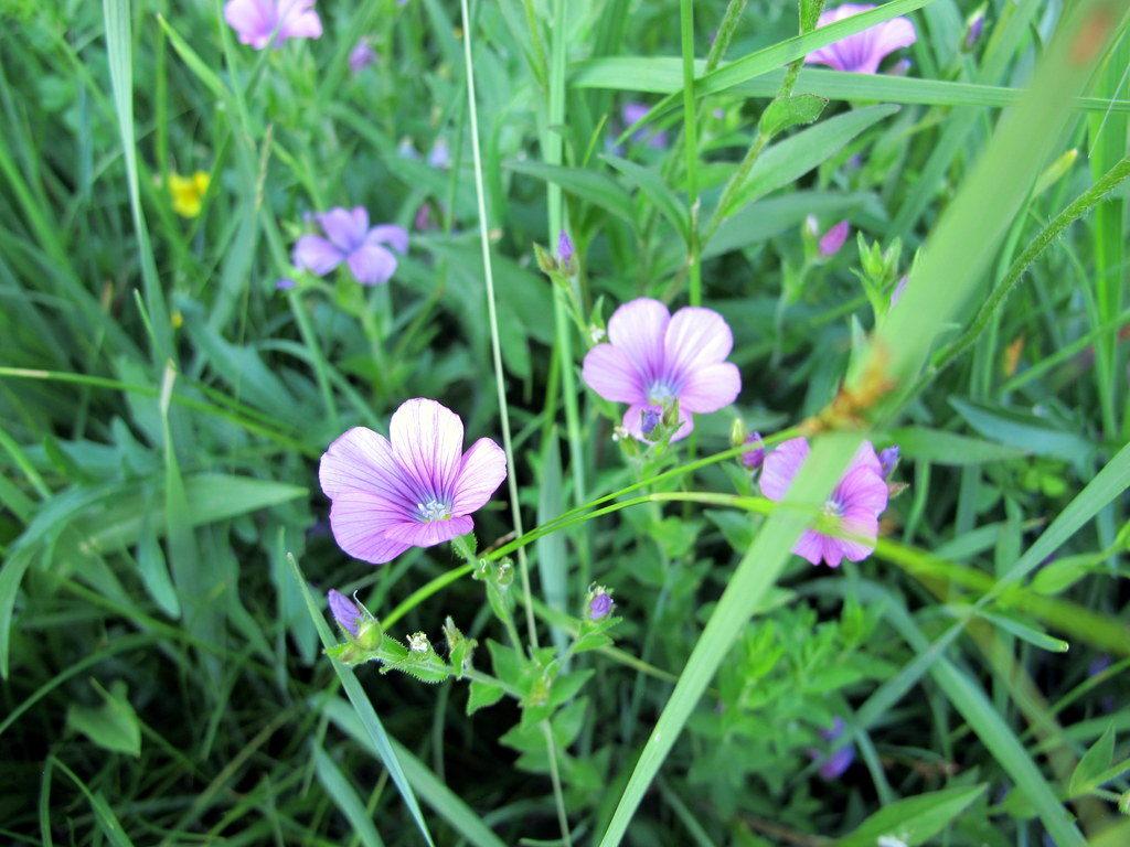 Orchideenwiesen Andechs (45)