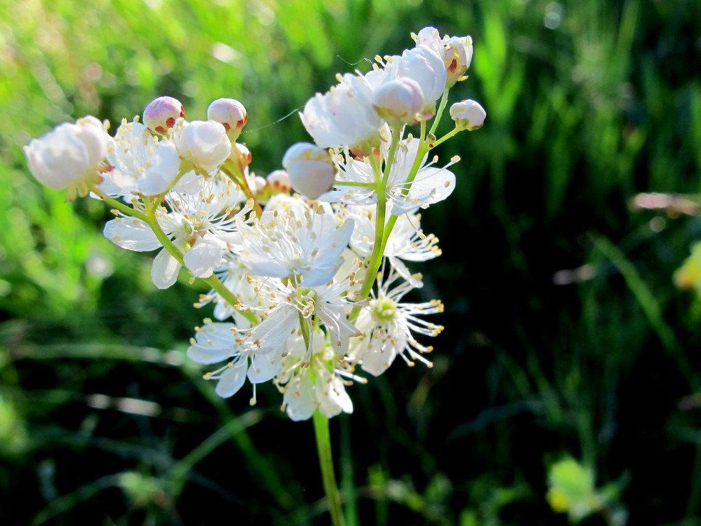Orchideenwiesen Andechs (46)