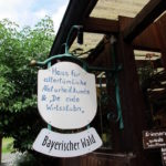 Chorwoche Bayer. Wald 2.-8.8 (17)