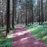 Chorwoche Bayer. Wald 2.-8.8 (25)