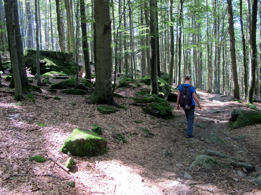 St. Englmar - Degenberg über Hirschenstein