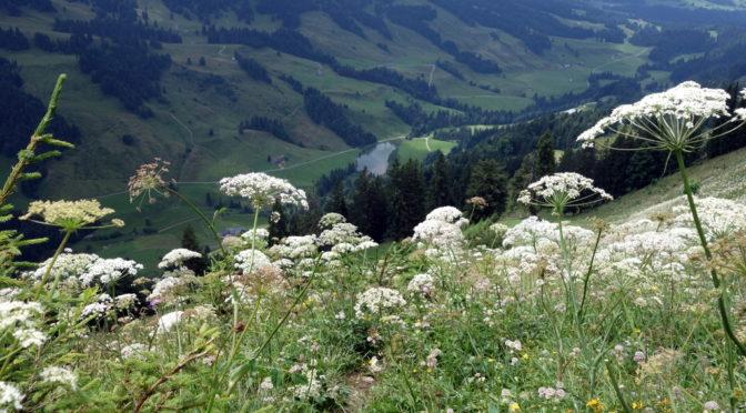 Maximiliansweg: von Oberstaufen (Hochgrat) nach Hittisau