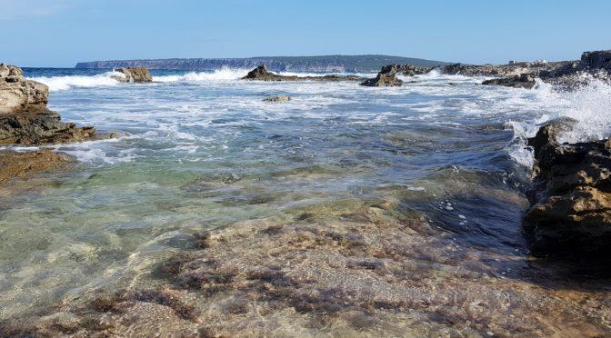 Ibiza, Formentera – viel Meer, etwas Stadt, ein wenig Fauna