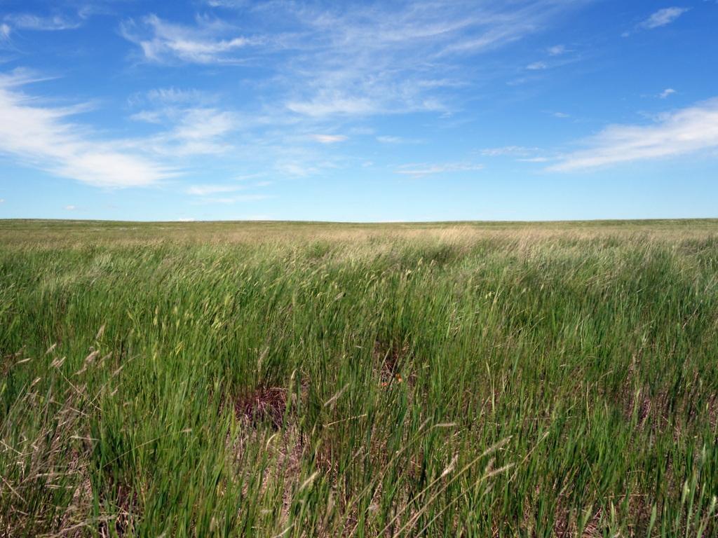Grassland National Park