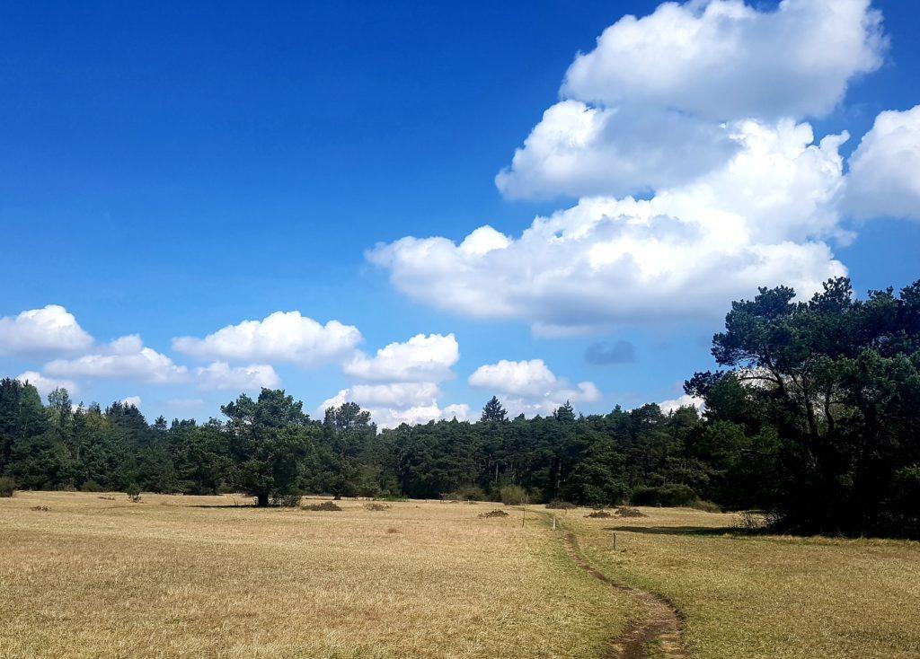 Königsbrunner Heide
