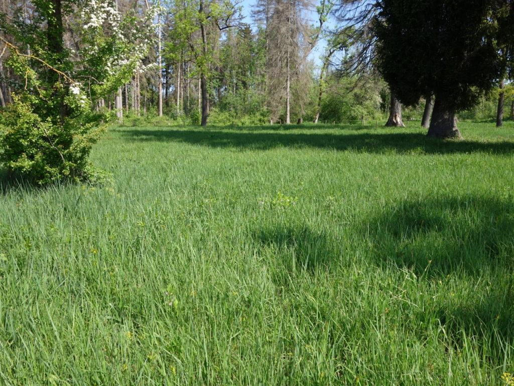 Taglilienfeld